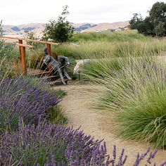 Meadow paths - Sunset Magazine's 2010-2011 Dream Garden Awards - Sunset