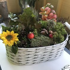 Fall, Outdoor Decor, Plants, Autumn, Fall Season, Plant, Planets