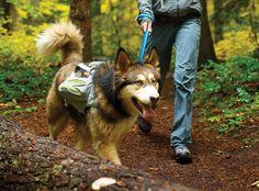 Ruffwear Singletrak Pack™ | Low-Profile Hydration Dog Pack