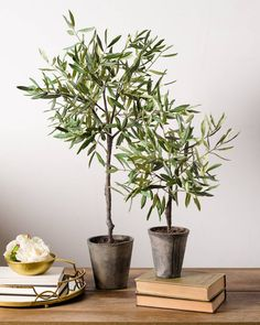 Campania Olive Topiary | Balsam Hill