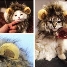 For Bella, Scratchy and Rusty. lol  Pet Costume Lion Mane Wig New Dog Cat Halloween Clothes Fancy Dress up with Ears