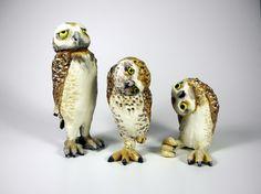 Gotta Love an Owl!  Paula Bellacera: Owls, 2012