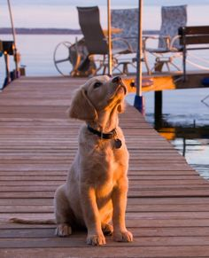 dock doggie, dog, cute, puppy, animal, pet