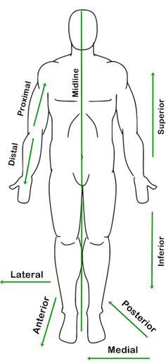 human figure diagram in anatomic position with labeled reference arrows showing anatomical directions, superior, inferior, lateral, medial, distal, proximal.