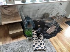 Rabbit enclosure in the apartment: ideas and tips for setting up Rabbit Enclosure, Bunny Room, Bunny Names, Indoor Rabbit, Rabbit Cages, Pet Cage, Pet Rabbit, Cute Funny Animals, Home Remodeling