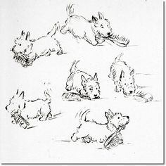 Sketches by Lucy Dawson (aka Mac), one of my favorite dog artists from the 1930's