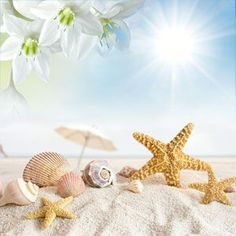 NG Sun and Sand Type Fragrance Oil