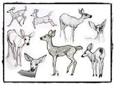 25 belos desenhos de animais para a sua inspiração 3