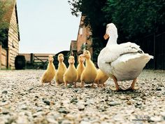 Now, children, we are going for a walk and I expect you all to behave yourselves...
