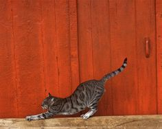 Tabby Cat, Wall Art and Home Décor at Art.com