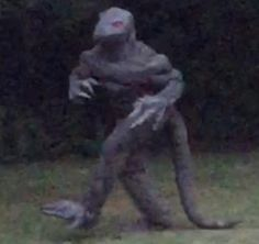 UFO SIGHTINGS DAILY: Famous Bishopeville Swamp Lizard Makes Rare Appear...