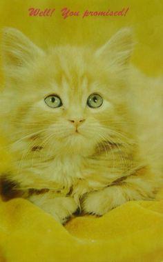 Chaton. Animals, Vintage, Wild Animals, Dog, Cards, Animaux, Animal, Vintage Comics, Animales