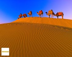 Avail unique Camel Safaris as well as Jeep Tours during which you can visit villagers who live in the Rajasthani Desert to see their traditional daily life; you will cross dunes and remote, isolated places of the Thar Desert, sleep in custom made bedrolls under the stars and experience some of the most beautiful sunsets, night skies and sunrises in the world.