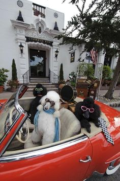 If you girls were poodles, this would be your portrait. Outside of Cypress Inn, Carmel, CA owned by legendary actress Doris Day, animal rights activist.