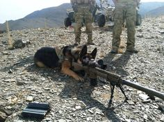 5th Deployment and he doesn't realize he's a dog yet.  Military Working Dog (MWD) German Shepherd Dog (GSD). Dog Tumblr, Tumblr Posts, Tumblr Funny, Funny Memes, Animal Memes, Cute Animals, Hilarious Animals, Humour, El Humor