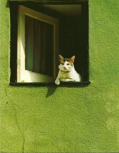 """PussyCat--at home /lovely"""" Pea-green"""" house in Portugal.  Reminds her of the Pea-green boat . . ."""