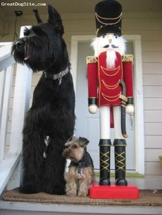 Giant Schnauzer w/miniature schnauzer, I so want one a giant schnauzer so I can take a pic like this with my mini Buster!!