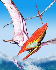 Thalassodromeus sethi is a pterosaur from the Early Cretaceous of Brazil. It had an extraordinary large skull surmounted by a huge bony crest. The crest was irrigated by blood vessels and might have been used for body temperature regulation. | Artist rendering | Illustration by D. Bogdanov