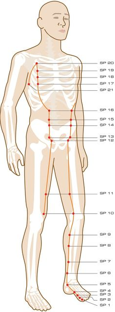 Acupuncture Meridian - Spleen