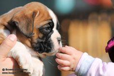 W litter puppy