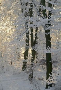 Find images and videos about winter and snow on We Heart It - the app to get lost in what you love. I Love Snow, I Love Winter, Winter Snow, Winter Christmas, Cozy Winter, Winter White, Winter Photography, Nature Photography, Photography Couples