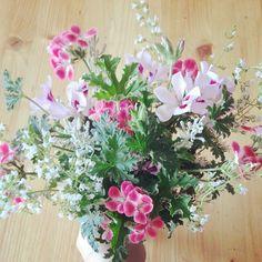 scented pepper geraniums, mint flowers, santolina