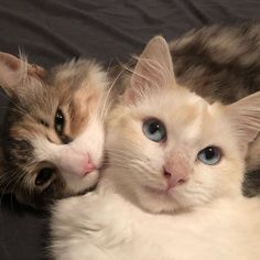 Grandpa Comes to Shelter to Brush Cats and Kittens and Falls Asleep with Them Every Day .for 6 Months Cute Cats And Kittens, I Love Cats, Kittens Cutest, Cute Funny Animals, Cute Baby Animals, Animals And Pets, Funny Cats, Crazy Cat Lady, Crazy Cats
