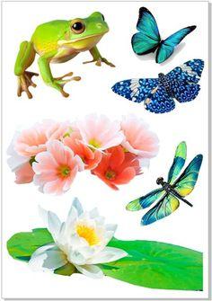 Лягушка, бабочки,цветы