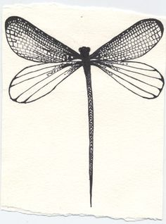 Beautiful drawing of a dragonfly.