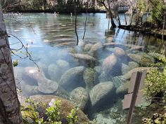 Three Sister Springs in FL. Manatee Sanctuary | Flickr