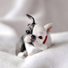 236 отметок «Нравится», 26 комментариев — Tanya Holas (@vell__vett) в Instagram: «I just Love #bostonterriers #frenchies and all #dogs ❤🐾❤ Miniature figurine in memory of sweet Mojo…»