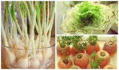 Top 10 Gemüse, die nachwachsen - New Ideas Raised Herb Garden, Herb Garden Pallet, Diy Herb Garden, Pallets Garden, Diy Garden Decor, Container Gardening, Gardening Tips, Small Herb Gardens, Food Photography Tips