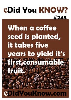 When a coffee seed is planted, it takes five years to yield it's first consumable fruit. http://edidyouknow.com/did-you-know-243/