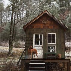 Sweet Rustic Cabin in the Woods with the dog :)