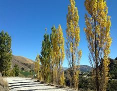 The road to Chard Farm Winery, Central Otago Central Otago, Kiwiana, New Zealand, Country Roads, Places, Image, Beautiful, Lugares