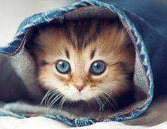 ..kitty in blue jeans