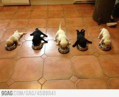 5 little puppies