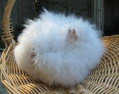 English Angora Rabbit Yarn 'Winston' 185 yards 34 by cashmerebunny,