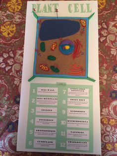 Plant cell model Science Ideas, Science Experiments, Plant Cell Project, Plant Cell Model, Cell Wall, 5th Grades, School Stuff, Projects, Plants