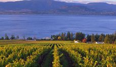 ahhh...the beautiful Okanagan vineyards and breathtaking lake