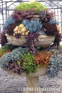 Fairy Garden Ideas Creative backyard garden design how to make. Succulents In Containers, Cacti And Succulents, Planting Succulents, Planting Flowers, Container Flowers, Container Plants, Succulent Gardening, Container Gardening, Garden Plants