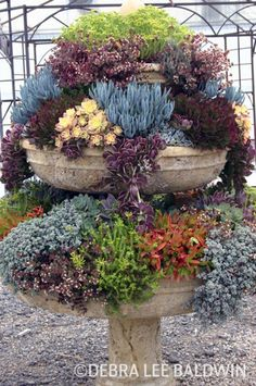 succulent container gardens photo gallery | take a gander all photos used with debra s permission