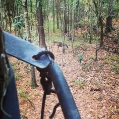 What Deer Hunters Can Do Now to Help Them this Fall