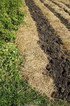 Preparing Your Vegetable Garden for Winter - The Happy Homesteader - MOTHER EARTH NEWS