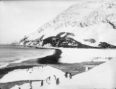 A view along the shore with penguins in the foreground - South Georgia - Photo by Frank Hurley - 1911-1914