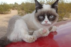 】 Cute Funny Cat Wallpapers Image Download