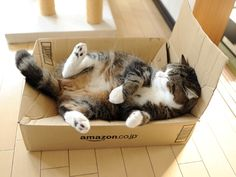 I wish I could order a Maru from Amazon.