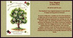 Hawthorn tree Magick