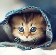The Cutest little kitten playing Hide And Seek!! love her eyes