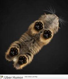 Teeny minuscule chatte noire